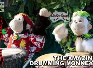 Amazing Drumming Monkeys: Hit Me With Your Rhythm Sticks ~ Adelaide Fringe 2021 Review